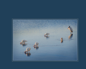 Birds standing in water0